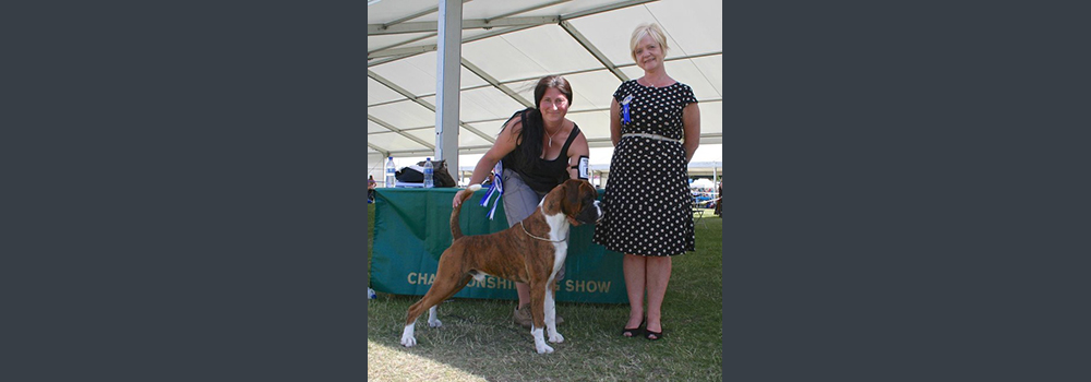Sleipnir Erik Weatherhat winning CC & BOB Windsor CH Show Judge: Mrs Julie Cook - June 30th 2013 (Pic taken by Tim Hutchings) Erik just 2 years old